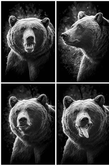 Bear in a Photo Booth, Eric Renard, 10x15 Photography $575
