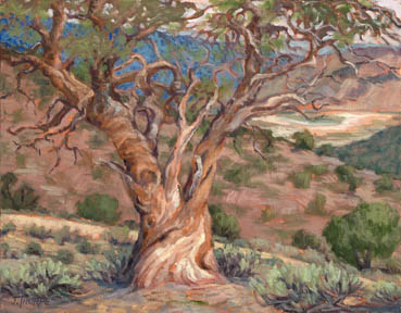 Grandview Juniper, Jane Thorpe, 14x18 Oil $850