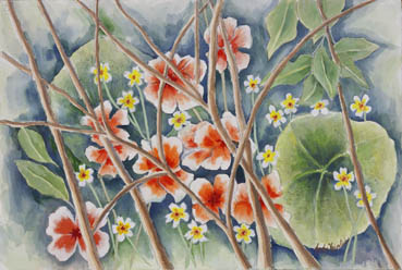 Pismo Blooms, Judy Heimlich,  Watercolor $775